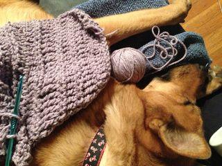 Crochetonadog